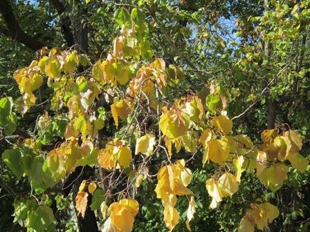 تاثیرات سرمازدگی در باغات و روش های جلوگیری از آن
